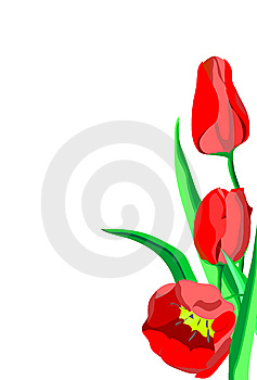 Three Bright Red Flowers Tulips With Green Leaves Stock Images - Image: 14057274