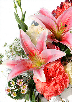 Lily Isolated On White Stock Photo - Image: 14058410