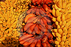 Red And Yellow Bananas Stock Photos - Image: 14061483
