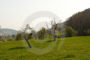 Idyllic Meadow With Trees Stock Photography - Image: 14064792