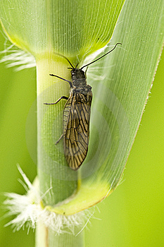 Leaf With Insect Stock Photography - Image: 14065112