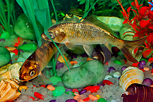 Fish In Aquarium Stock Photo - Image: 14072880
