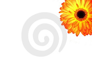 Beautiful Gerberas Royalty Free Stock Photos - Image: 14074688