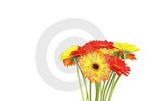 Many Beautiful Gerberas Royalty Free Stock Images - Image: 14074699