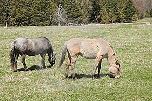 Pair Of Horses Royalty Free Stock Image - Image: 14076346