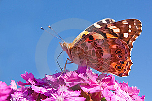 Butterfly On Flower Stock Photos - Image: 14077733