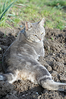 Lazy Grey Cat Laying At Garden Stock Images - Image: 14081094