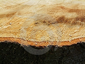 Tree Trunk Detail Stock Photography - Image: 14081332