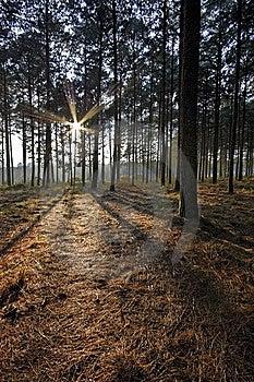 Sunrise Forest Royalty Free Stock Photo - Image: 14087825