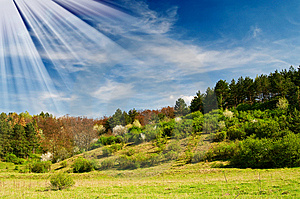 Wonderful Sunbeams And Exciting Blooming Trees. Royalty Free Stock Photo - Image: 14095145