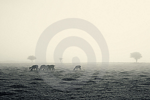 Deer On A Foggy Morning Royalty Free Stock Photography - Image: 14095637
