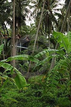 Tropical Spa Stock Photo - Image: 1414330