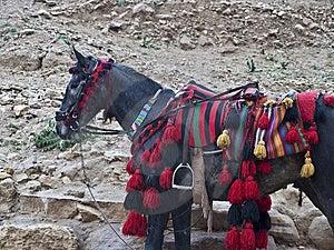 Pony With Dressed Saddle Royalty Free Stock Photo - Image: 14101095