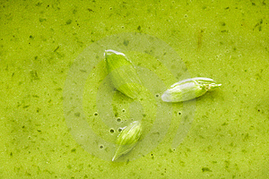 Detail Of Spinach Soup With Wild Garlic Flowers Royalty Free Stock Images - Image: 14109119