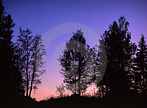 Sunrise In Forest Royalty Free Stock Photos - Image: 14111258