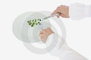 πιάτο γευμάτων Στοκ Εικόνα - εικόνα: 14111981