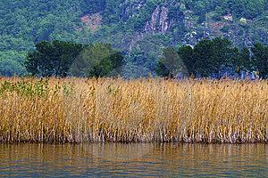Cane Thicket Stock Images - Image: 14113254