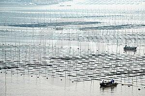 Seaweed farming Stock Image - Image: 14117381