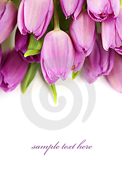 Tulips Royalty Free Stock Photos - Image: 14119148