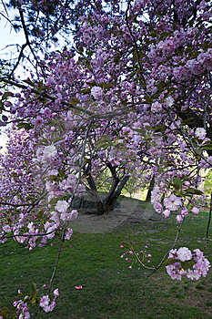 Spring In Central Park Stock Images - Image: 14122264