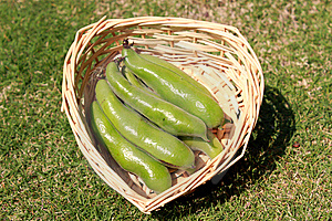 Fava Or Broad Beans Royalty Free Stock Photos - Image: 14122428