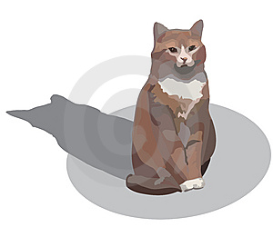 Almost Red Cat Royalty Free Stock Photo - Image: 14123885