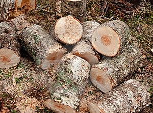 Chopped Logs Stock Photography - Image: 14124152