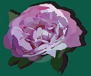 Bud Of Rose Stock Photography - Image: 14124202