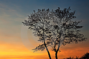 Tree Silhouette At Sunset. Stock Images - Image: 14126384