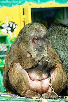 Monkey Stock Photos - Image: 14130033