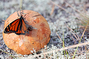 Mushroom With Butterfly Stock Photo - Image: 14136350
