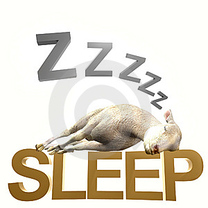 Sleeping Sheep Or Lamb Royalty Free Stock Photos - Image: 14147428