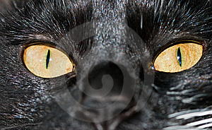 Cat Eyes Royalty Free Stock Photos - Image: 14148098
