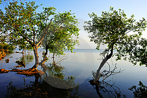 Tree In Water Royalty Free Stock Images - Image: 14149429