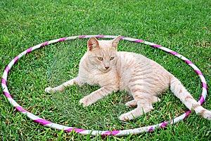 Tawny Cat Royalty Free Stock Photos - Image: 14150308