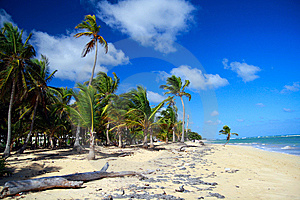 Palm Forest On Caribbean Beach With White Sand Stock Photography - Image: 14154862