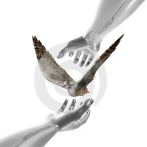 Símbolo Calmo Da Pomba E Das Mãos Foto de Stock Royalty Free - Imagem: 14156545
