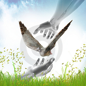Hands Catching Dove For Peace Symbol Stock Image - Image: 14156631