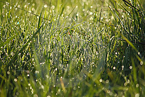 Dew On The Grass Stock Images - Image: 14160044