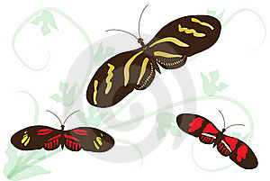 Passion Flower Butterflies (heliconius) Stock Photo - Image: 14161420