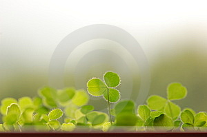 I Am Taller Than You Royalty Free Stock Image - Image: 14165066