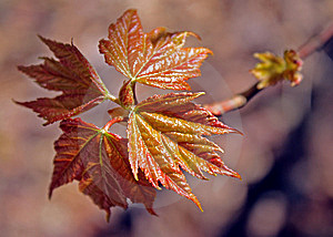 New Leaves Stock Photo - Image: 14165120
