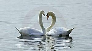 Love Stock Photo - Image: 14176270