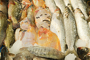 Fresh Fish For Sale Stock Image - Image: 14176931