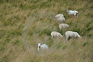 English Countryside Landscape: Sheep In Grass Stock Photo - Image: 14179210