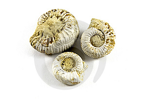 Ammonite Fossil Stock Images - Image: 14180514