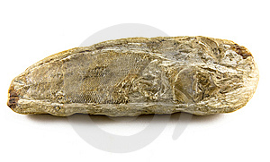 Fish Fossil Royalty Free Stock Images - Image: 14180679