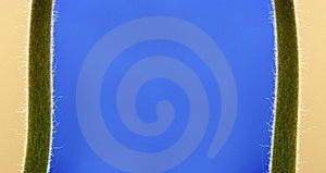 Plant Borders Stock Image - Image: 14181701