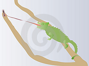 Chameleon Stock Photography - Image: 14191552