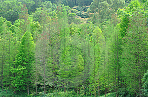 Green Trees On Hill Stock Image - Image: 14195711